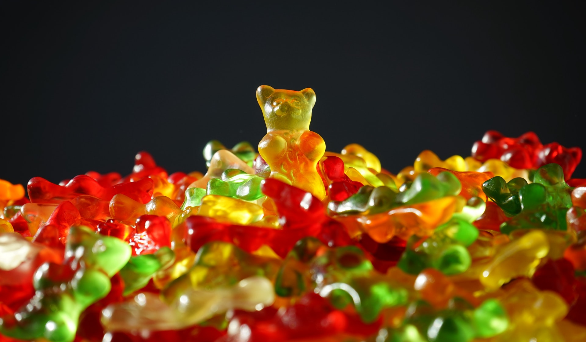 bear-bears-candy-55825
